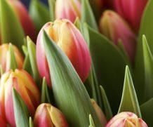 24 тыс. цветов к Международному женскому дню