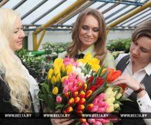 «Могилевзеленстрой» подготовил к 8 Марта 24 тыс. цветов