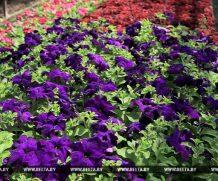 Более 1,5 млн цветочной рассады к весенней высадке