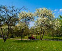 Весеннее озеленение областного центра