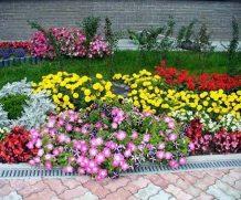 Лучшая цветочная композиция в Мстиславле