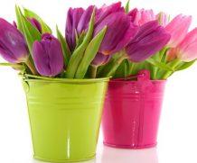 10 тысяч тюльпанов к 8 марта
