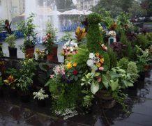 Выставка-конкурс «Удивительный мир цветов»