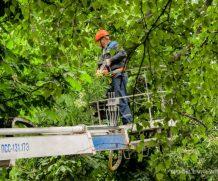 9 вопросов о городских деревьях
