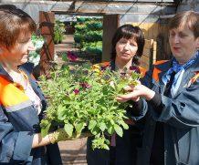 Цветочную рассаду подготовил к весенней высадке «Могилевзеленстрой»