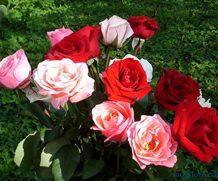 10 тыс. цветов ко дню влюбленных
