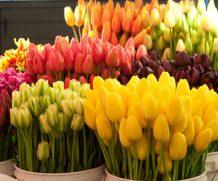 «Могилёвзеленстрой» реализует 24 тыс. цветов