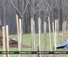Более 500 деревьев высадят во время субботника в могилевском парке Подниколье